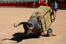 https://glasgowinternational.org/wp-content/uploads/2016/02/PatrickColeBullfighting-225x148.jpg
