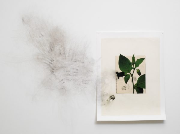 Painting of flower leaves stuck to a white wall that has been stained with dirt